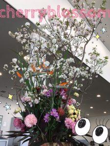 桜咲いてます! △四日市