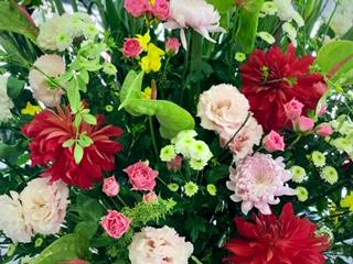 ショールームのお花